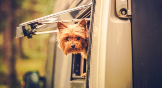 camping-car-animaux