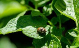 insecte-jardin